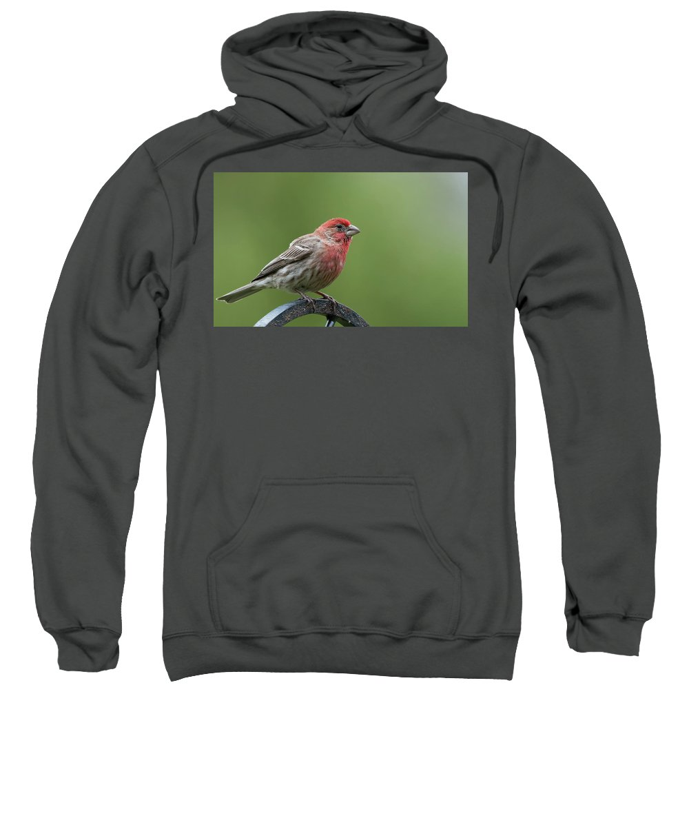 Birds Sweatshirt featuring the photograph House Finch by Clifford Pugliese