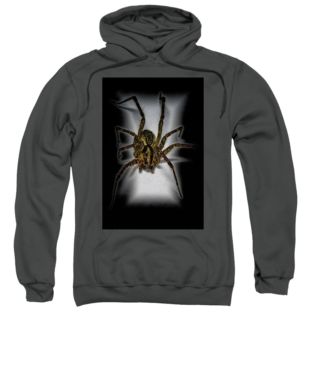 Macro Sweatshirt featuring the photograph House Spider by Robert Storost