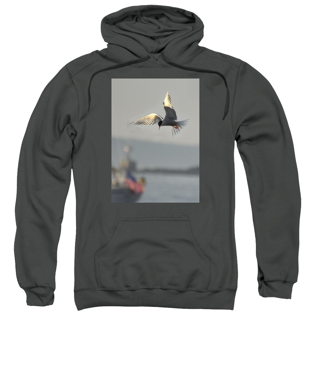 Sweatshirt featuring the photograph Hovering Tern by Robert Hayes