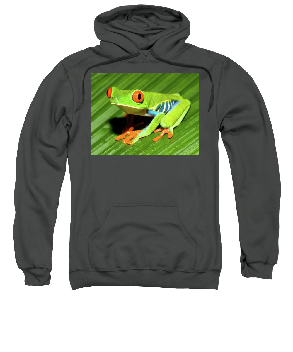 Red-eyed Tree Frog Sweatshirt featuring the photograph How About Some Real Color by Max Waugh