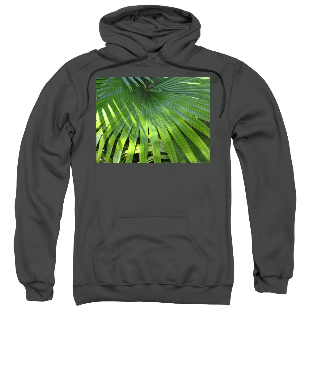 Palm Tree Leaf Sweatshirt featuring the photograph Huge Palm Leaf by Nancy Hopkins