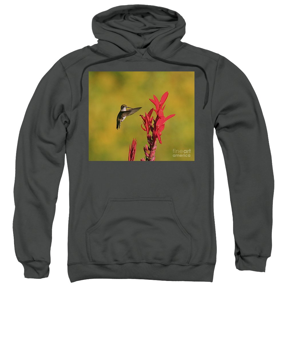 Humming Bird Sweatshirt featuring the photograph Hummer by Robert Pearson