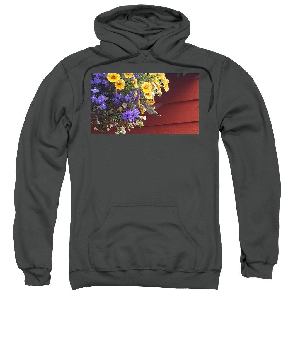 Cat Sweatshirt featuring the painting Humming Bird by Michael Madi