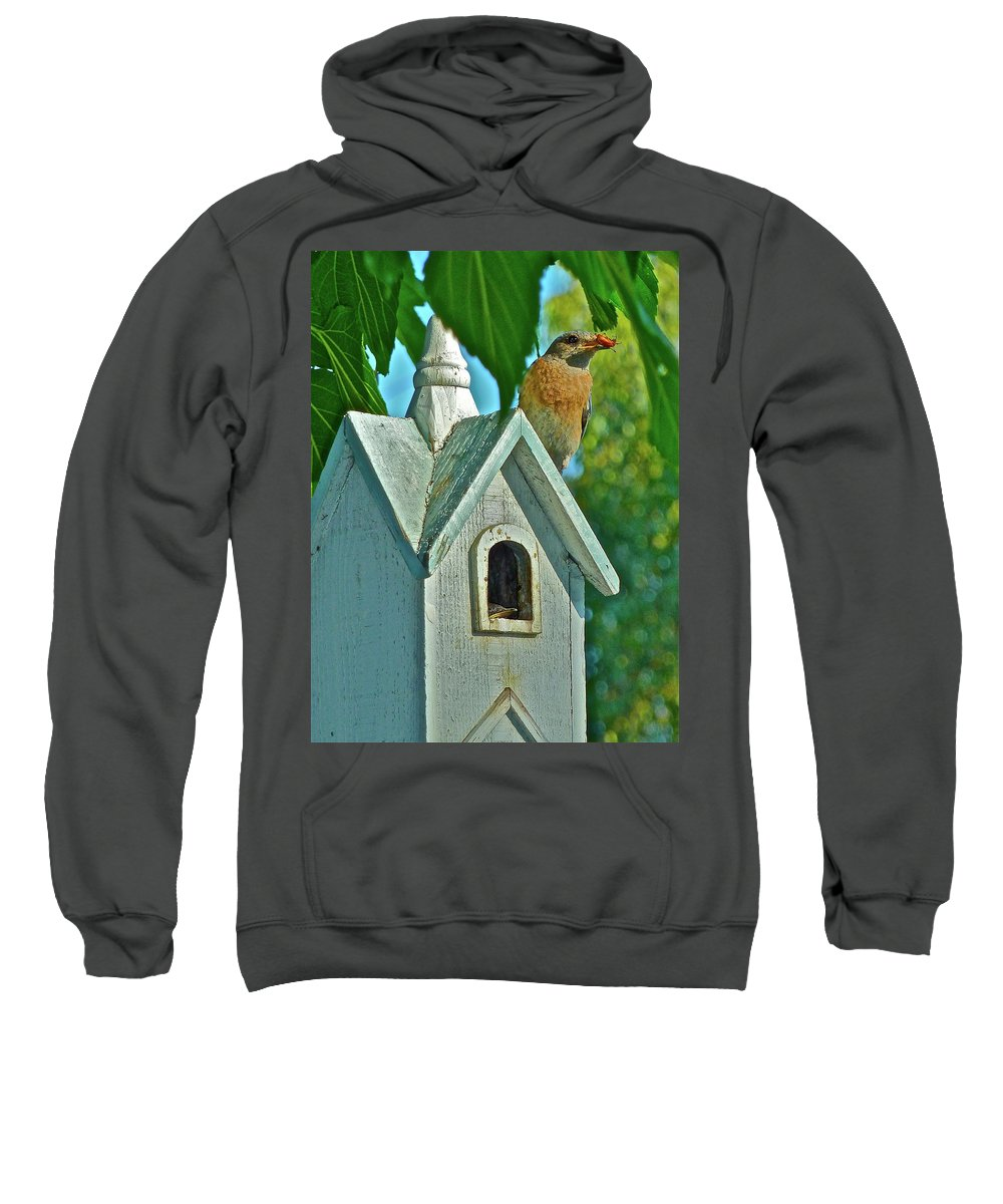 Birds Sweatshirt featuring the photograph Hungry Baby by Diana Hatcher