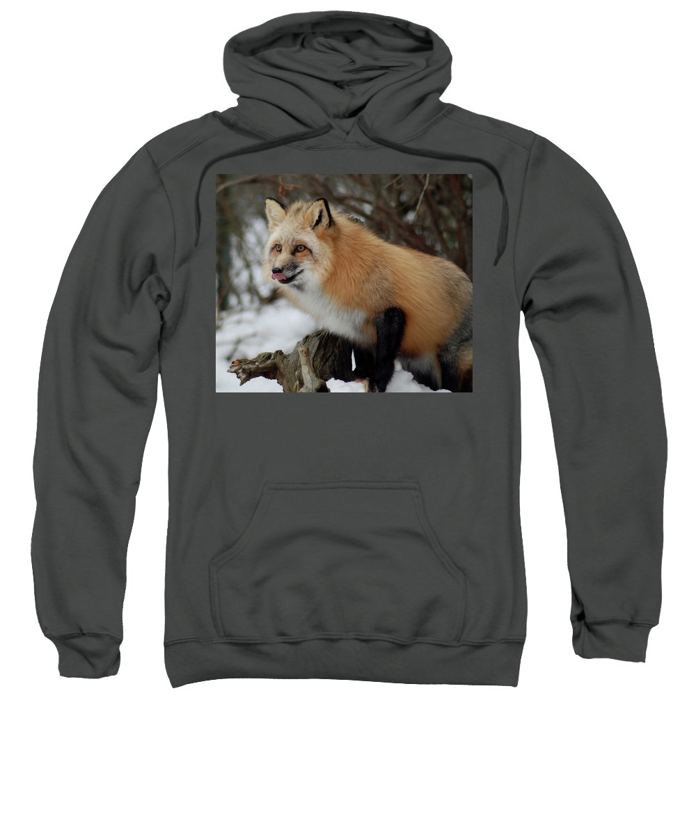 Fox Sweatshirt featuring the photograph Hungry Fox by Richard Bryce and Family