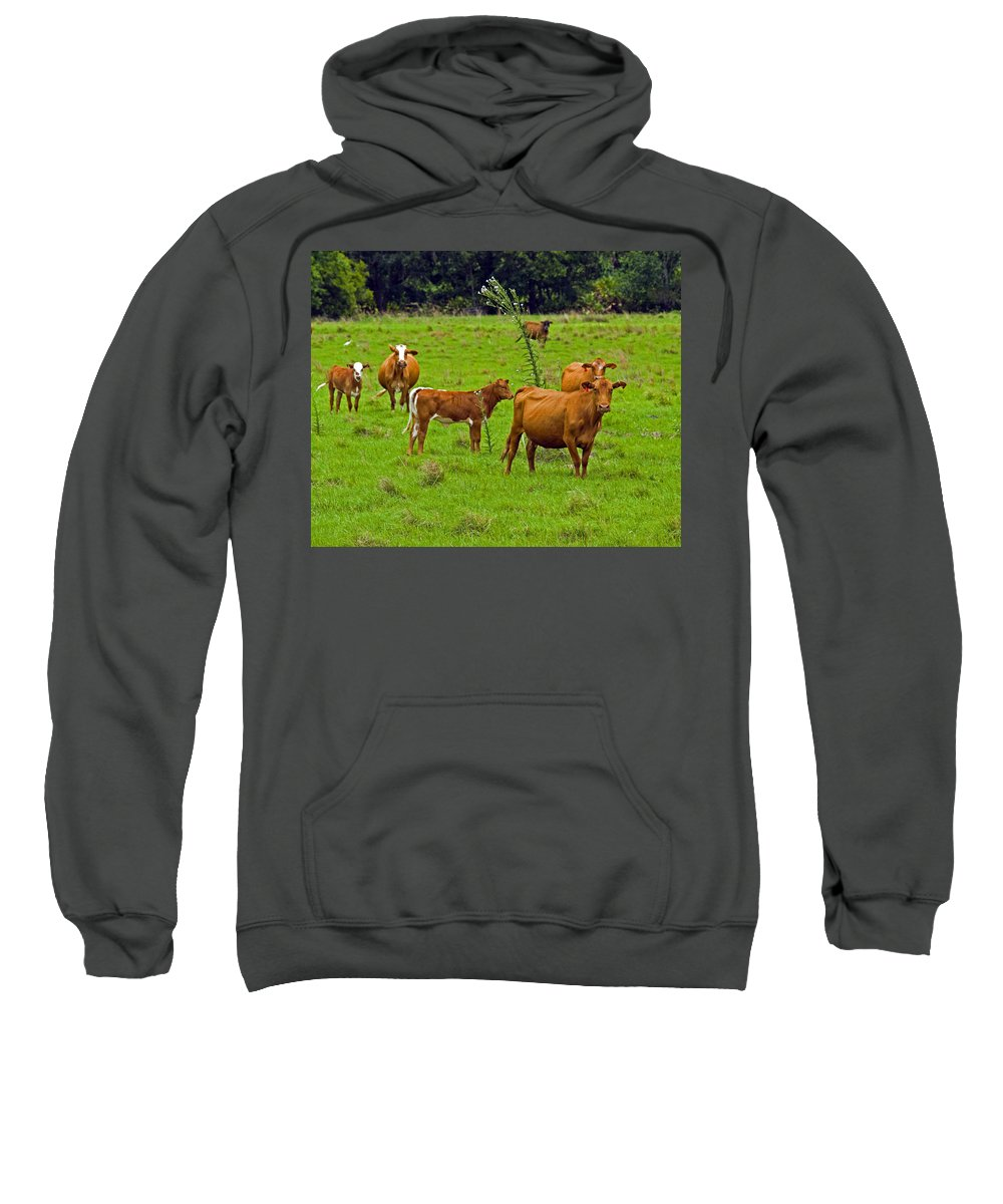 Black; Red; Angus; Brahman; Simmental; Red Poll; Hereford; Cattle; Braford; Cow; Cows; Bull; Milk; B Sweatshirt featuring the photograph Hybrid Cattle On The Deseret Ranch In East Central Florida by Allan Hughes