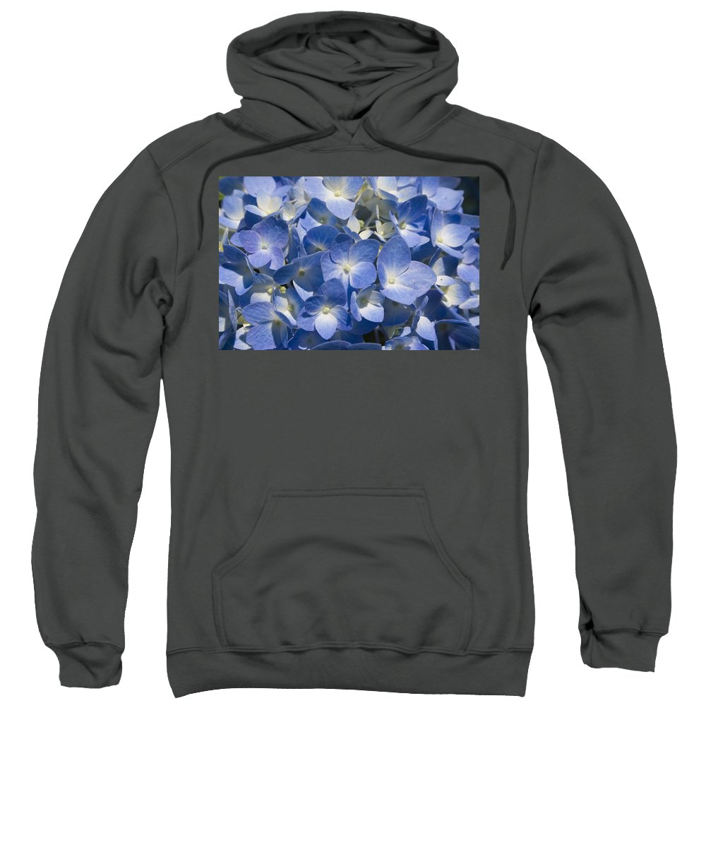 Flower Bloom Blue White Close Nature Sunny Summer Hydrangea Sweatshirt featuring the photograph Hydrangea by Andrei Shliakhau