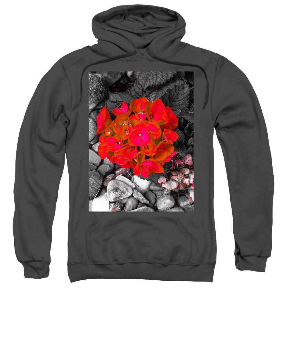 Hydrangea Sweatshirt featuring the photograph Hydrangea In Carmine by Jennifer Kohler