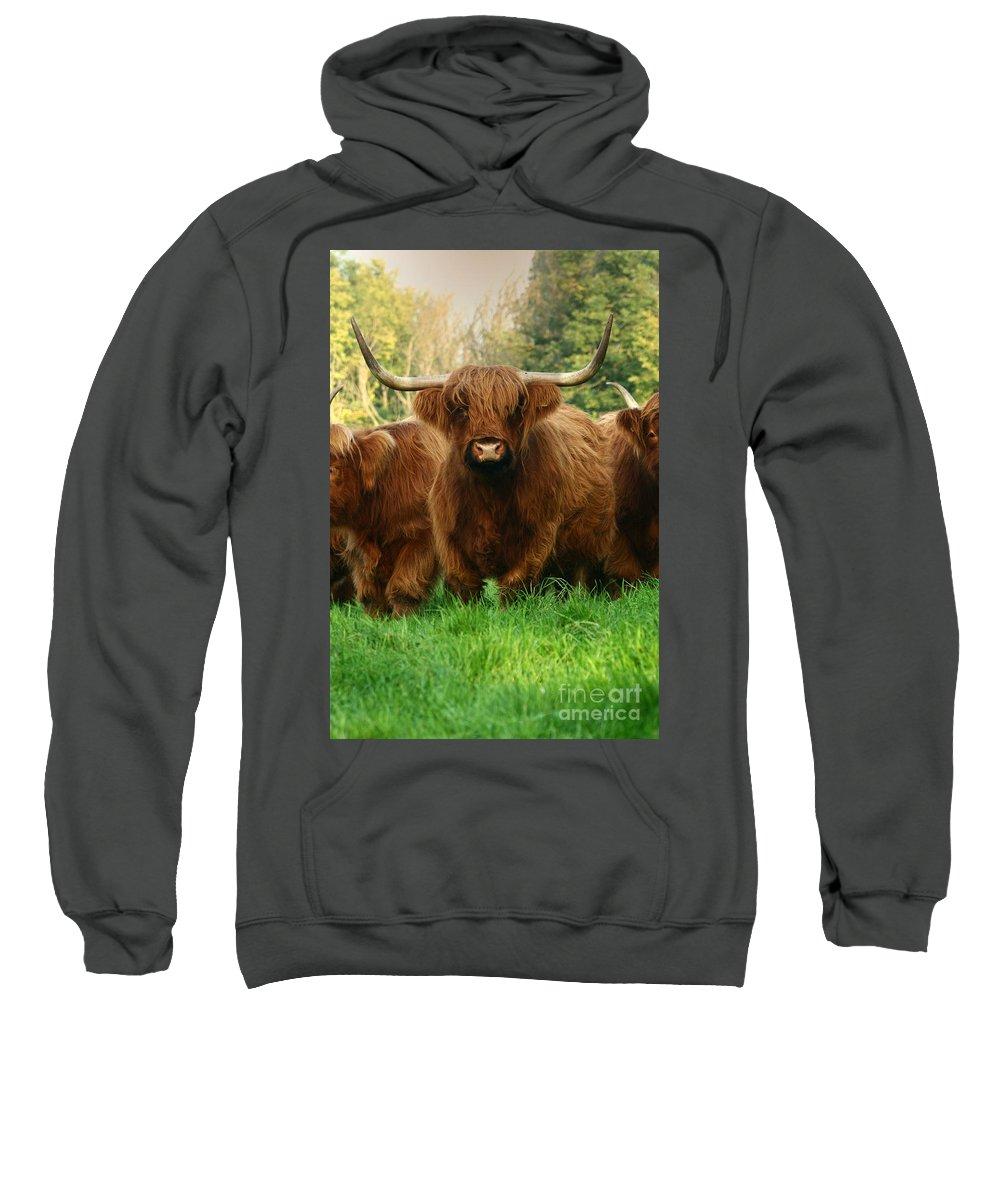 Cow Sweatshirt featuring the photograph I Am The Boss Here by Angel Ciesniarska