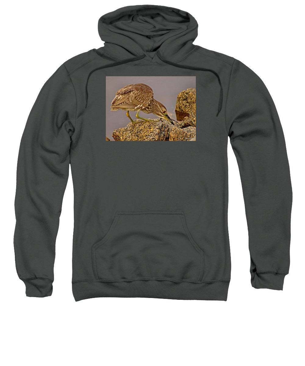 Black Crowned Night Heron Sweatshirt featuring the photograph P2035053 I See You by Stephen Ham