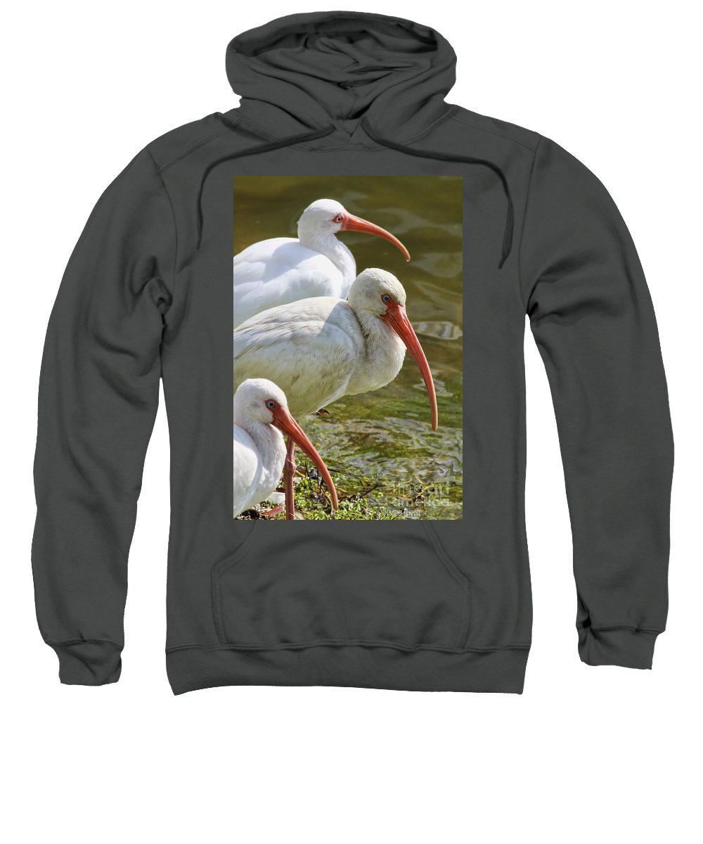 Sweatshirt featuring the photograph Ibis Three by Deborah Benoit