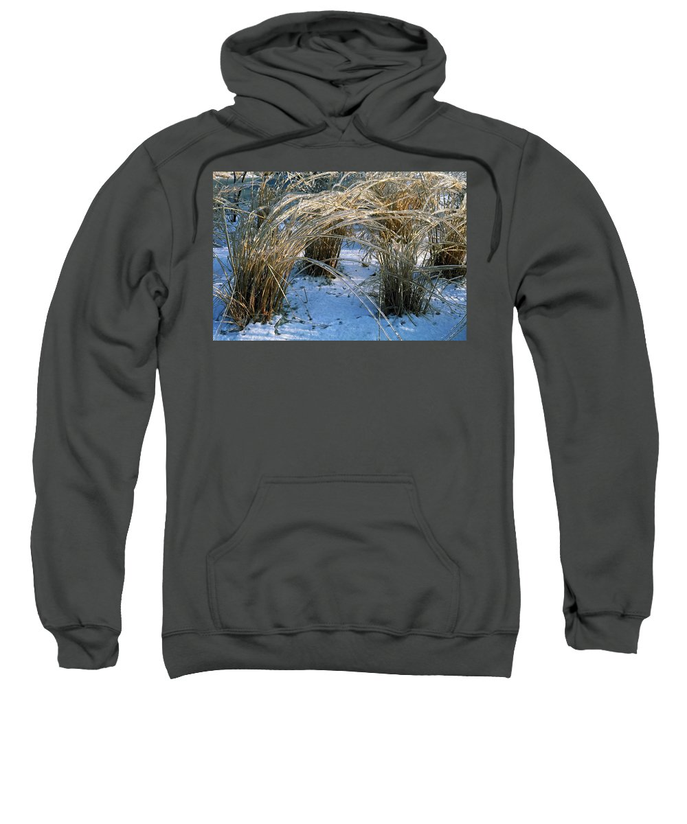 Ornamental Grass Encased In Ice Sweatshirt featuring the photograph Iced Ornamental Grass by Sally Weigand