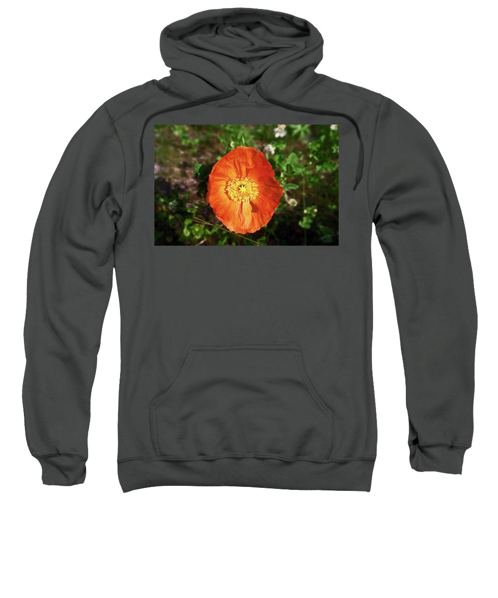 Iceland Poppy Sweatshirt featuring the photograph Iceland Poppy by Sally Weigand