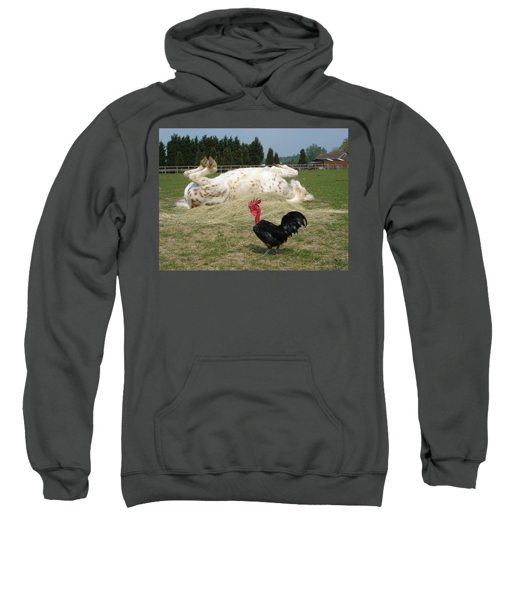 Pony Sweatshirt featuring the photograph If Looks Could Kill by Susan Baker