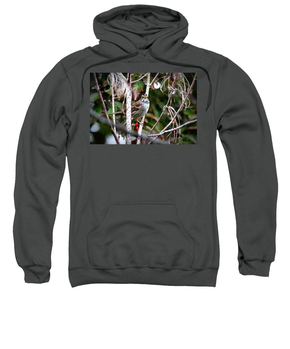 White-throated Sparrow Sweatshirt featuring the photograph Img_6624-002 - White-throated Sparrow by Travis Truelove