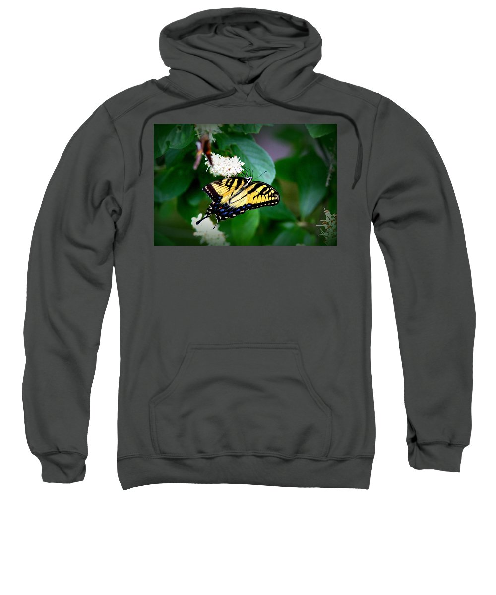 Swallowtail Butterfly Sweatshirt featuring the photograph Img_8712-001 - Swallowtail Butterfly by Travis Truelove