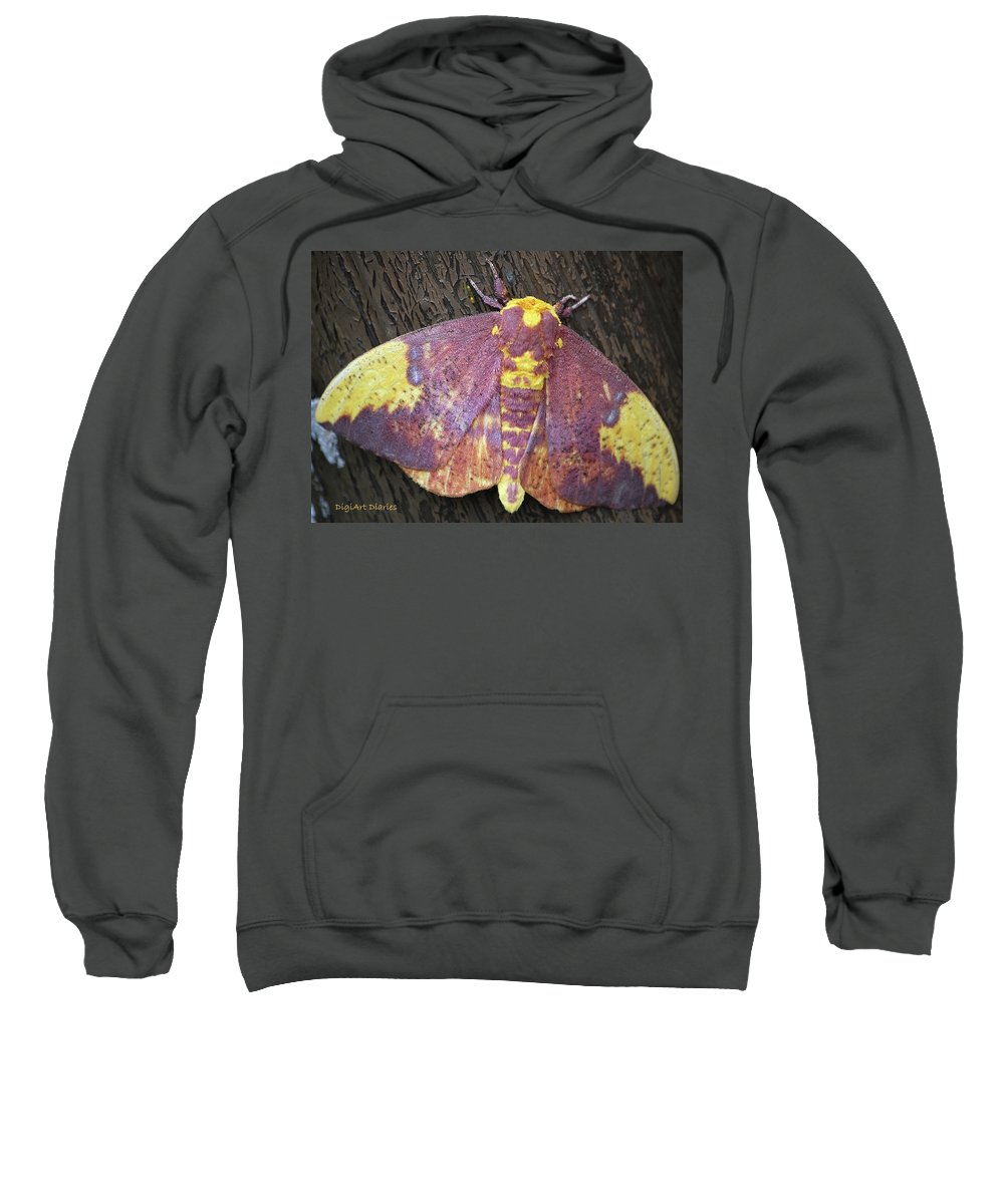 Moths Sweatshirt featuring the digital art Imperial Moth by DigiArt Diaries by Vicky B Fuller