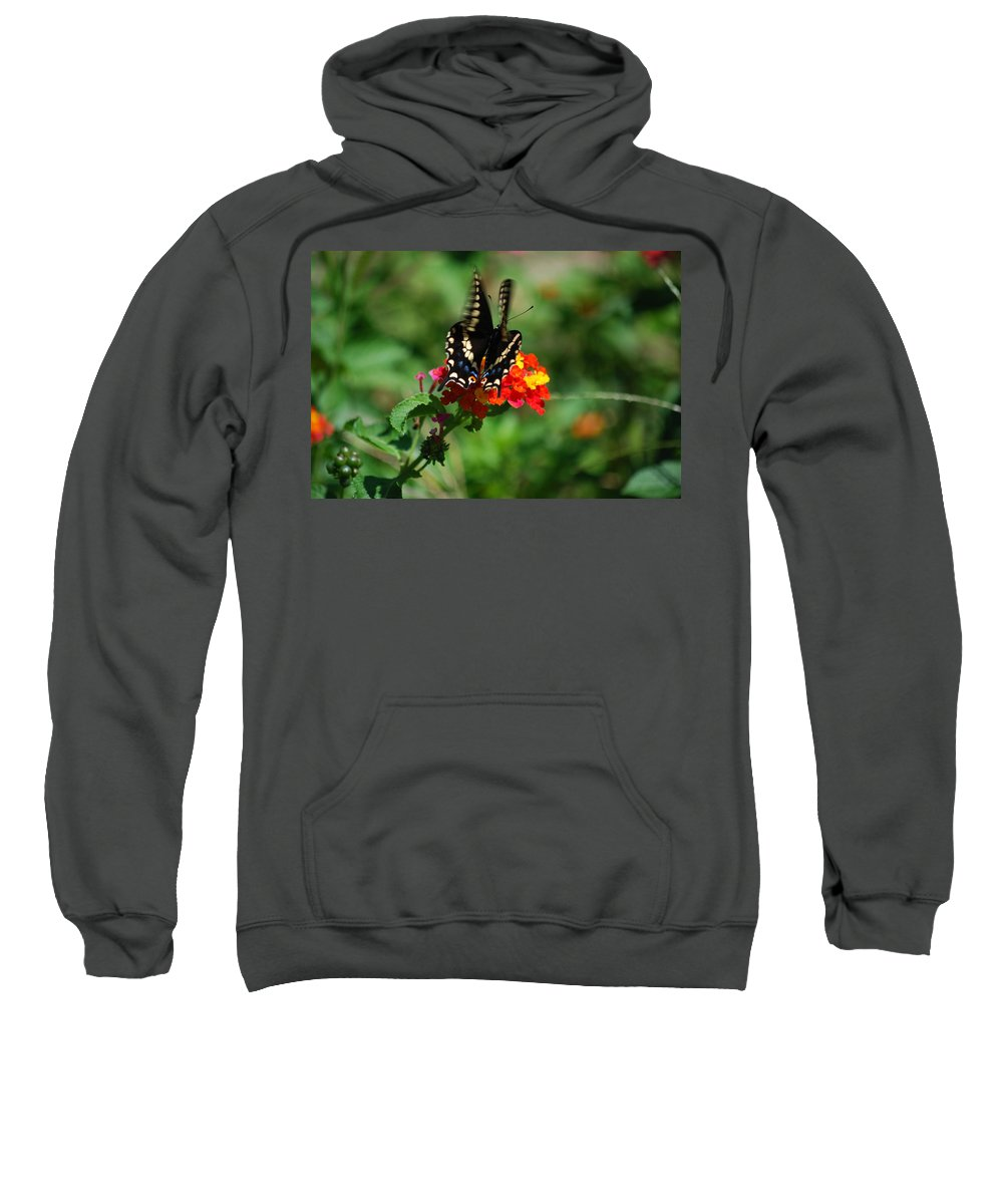Swallowtail Sweatshirt featuring the photograph In Motion by Lori Tambakis
