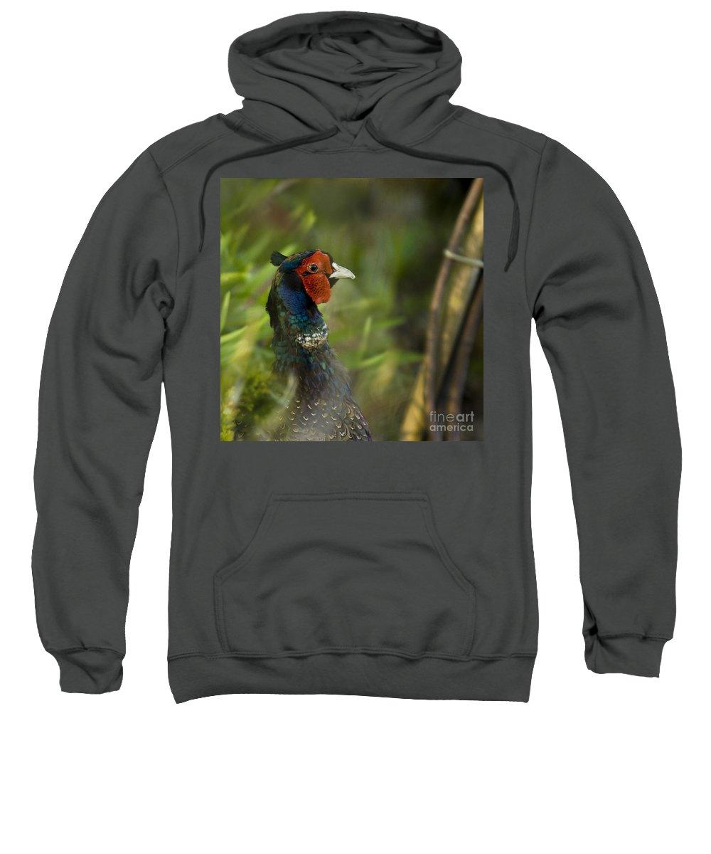 Pheasant Sweatshirt featuring the photograph In My Garden by Angel Ciesniarska