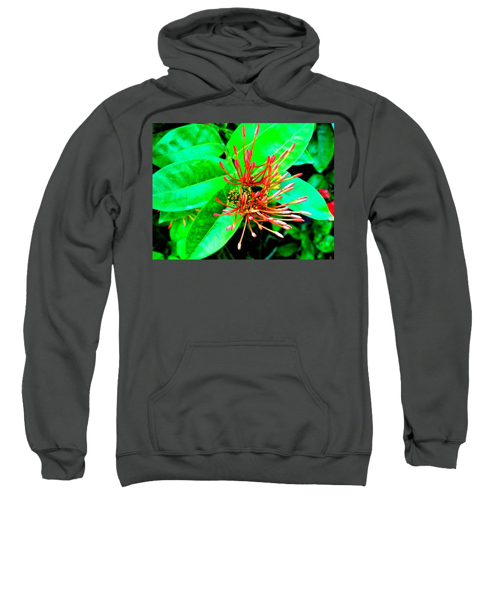 Flower Sweatshirt featuring the photograph In My Garden by Ian MacDonald