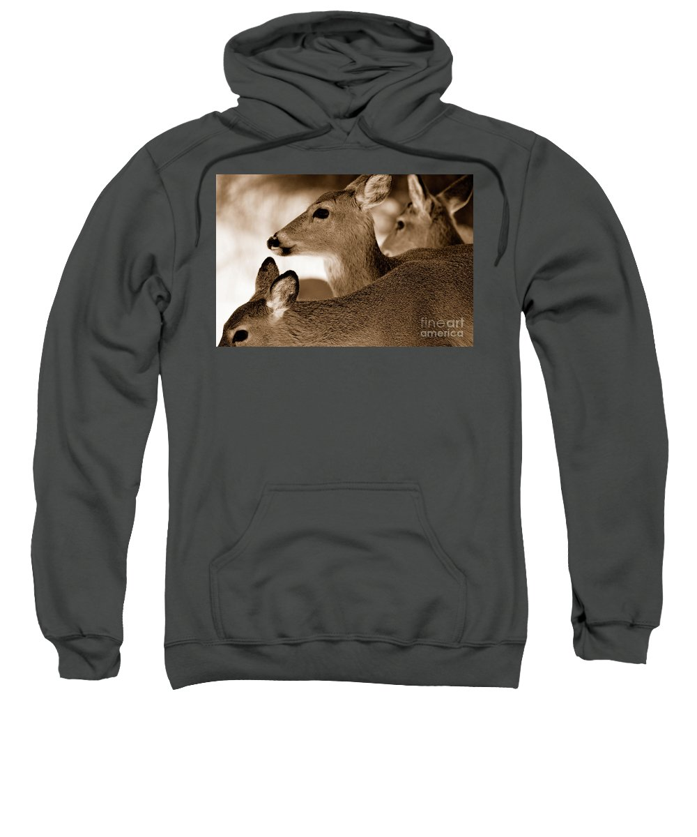 Deer Sweatshirt featuring the photograph In The Middle by Lori Tambakis