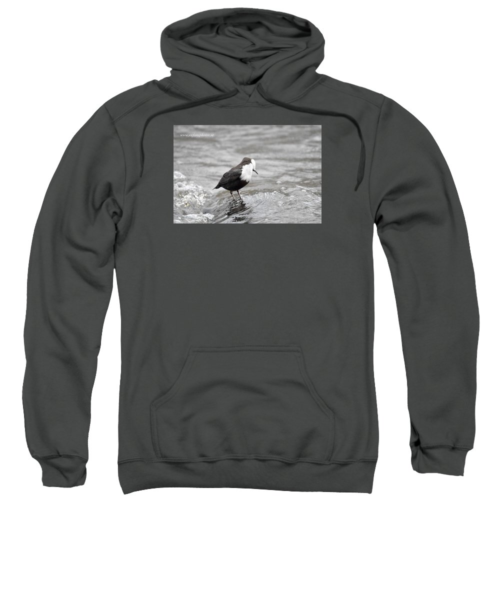 Sweatshirt featuring the photograph In The Water by Stefan Pettersson