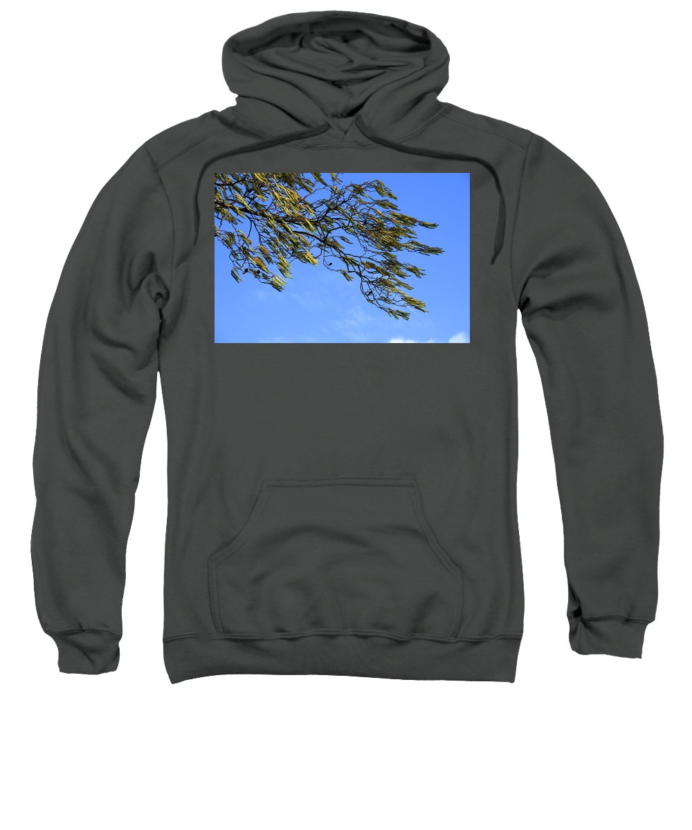 Tree Sweatshirt featuring the photograph In The Wind by Erin Larcher