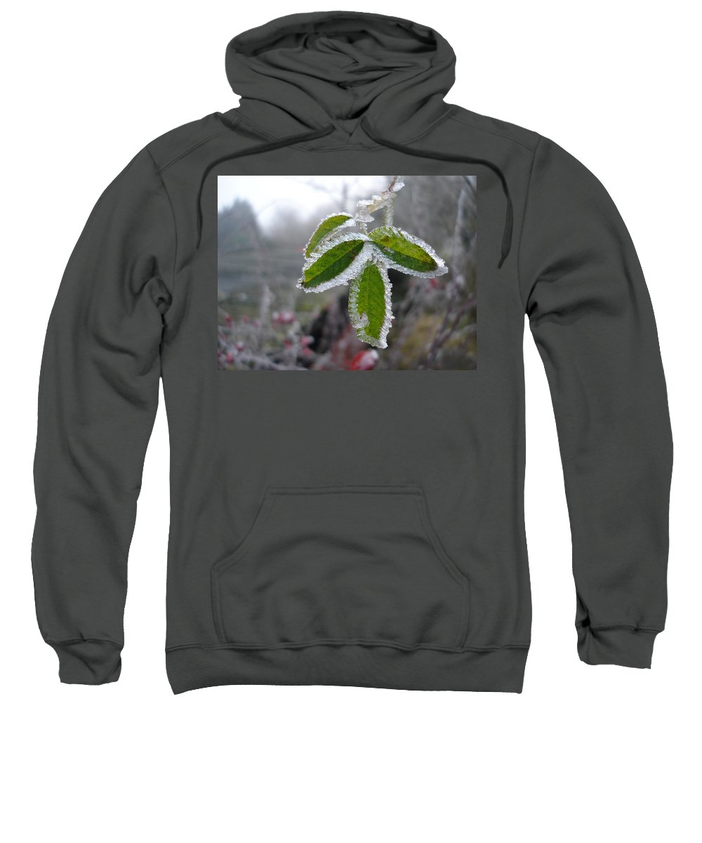 Winter Sweatshirt featuring the photograph In The Winter Sunlight by Susan Baker