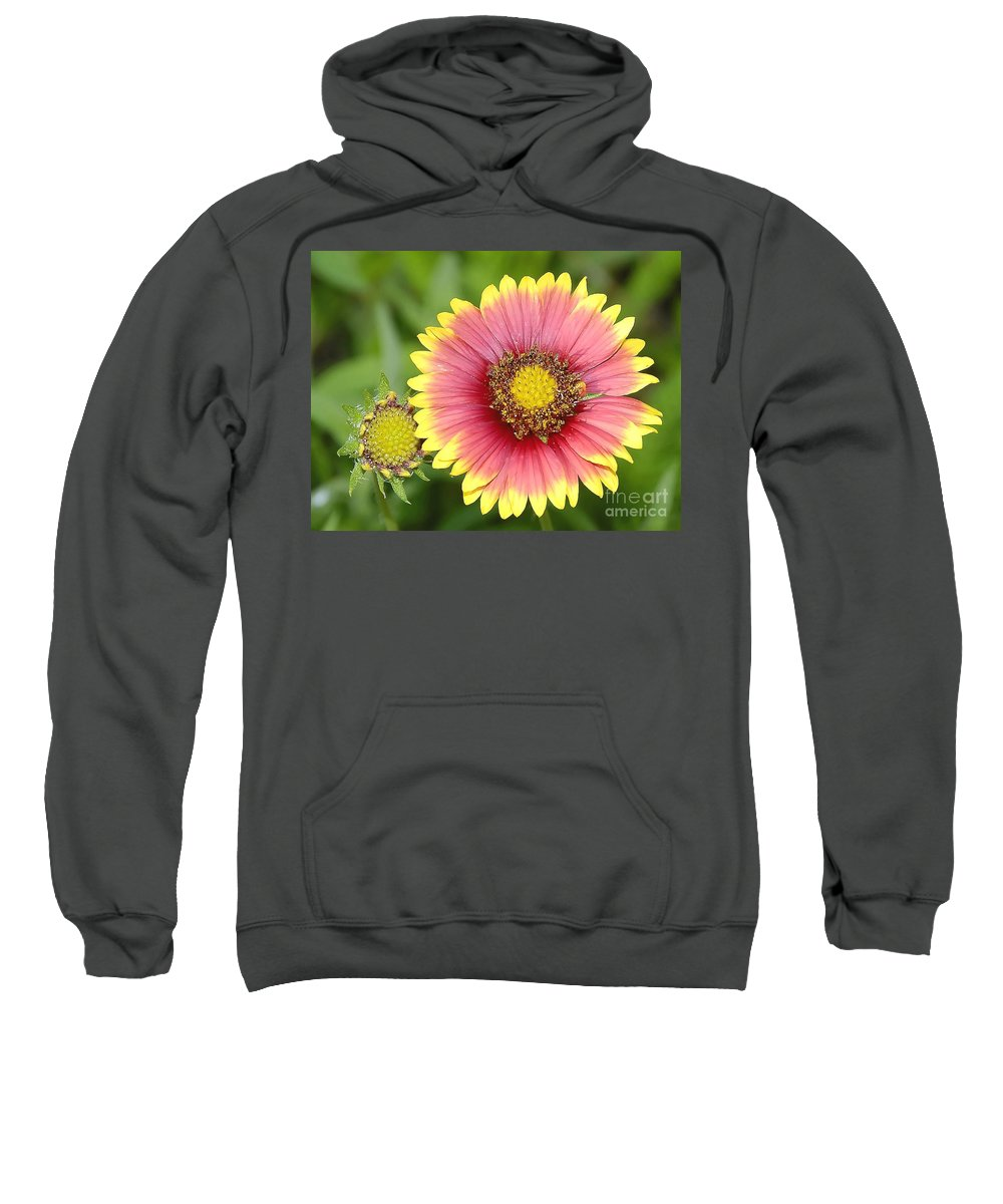 Indian Paintbrush Sweatshirt featuring the photograph Indian Paintbrush by David Lee Thompson