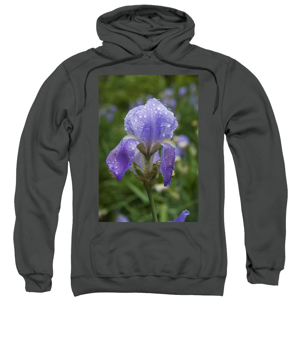 Iris Flower Blue Purple Green Rain Wet Drop Water Droplet Nature Garden Sweatshirt featuring the photograph Iris After Rain by Andrei Shliakhau