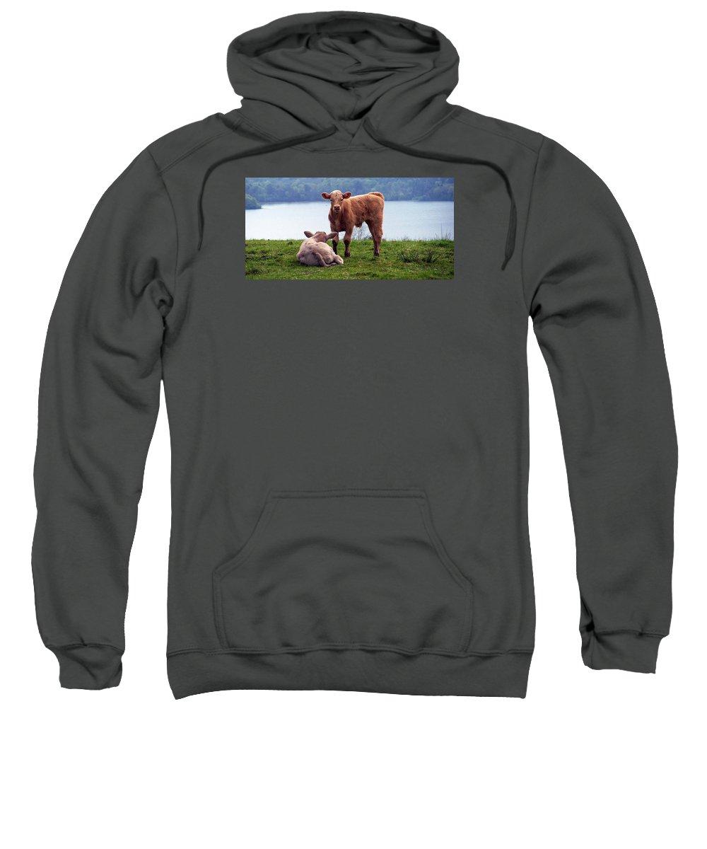 Ireland Sweatshirt featuring the photograph Irish Calves At Lough Eske by Teresa Mucha