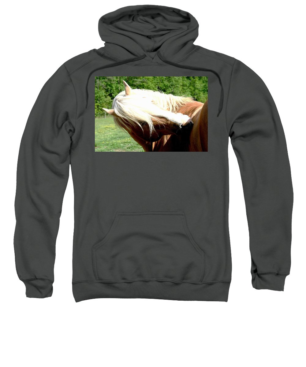 Horse Sweatshirt featuring the photograph Itchy Spot by Tina Meador
