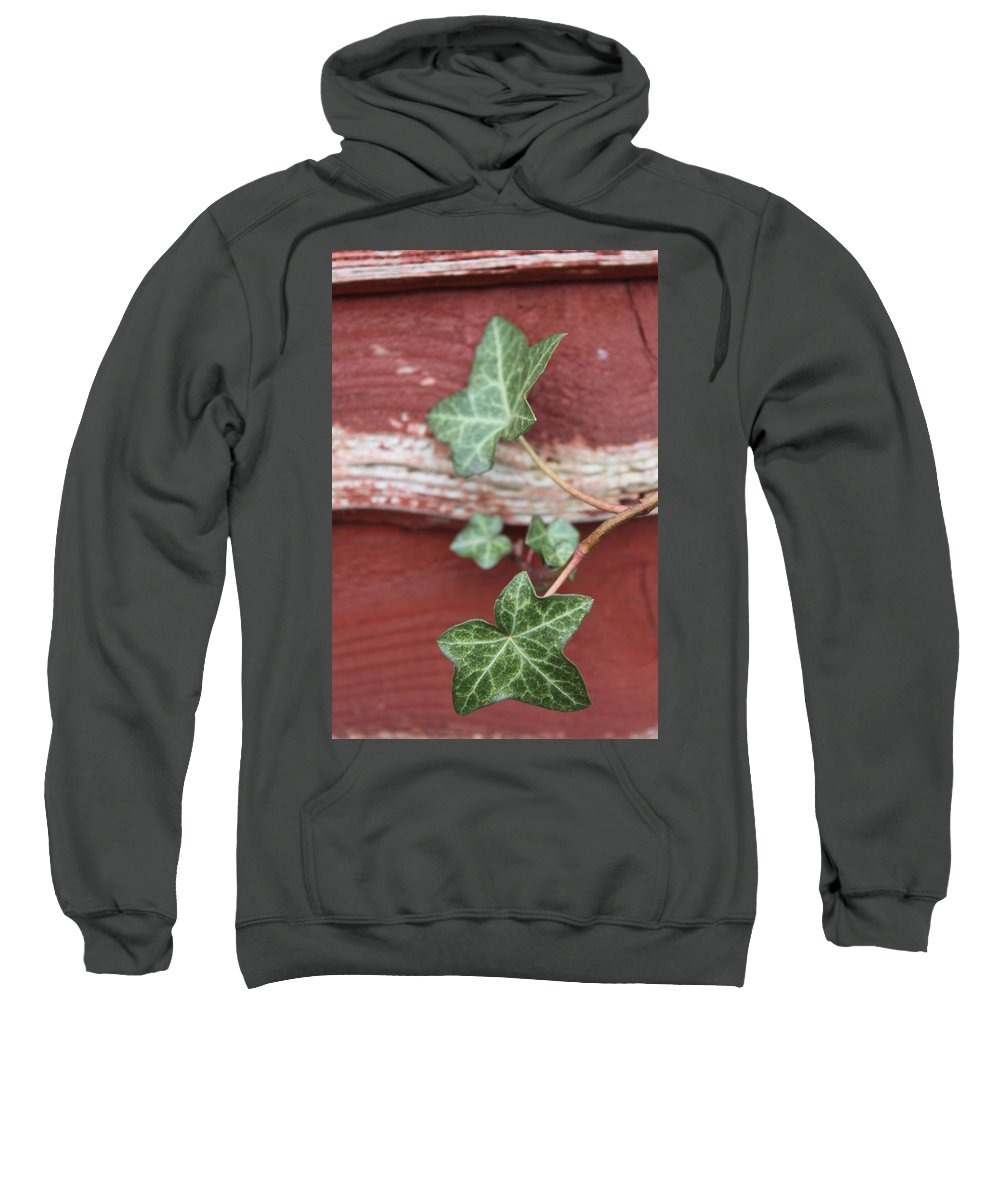 Ivy Sweatshirt featuring the photograph Ivy by Lauri Novak