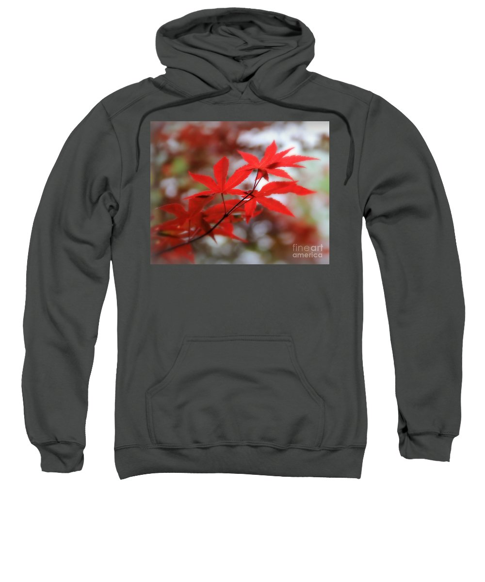 Maple Sweatshirt featuring the photograph Japanese Maple by Perry Webster