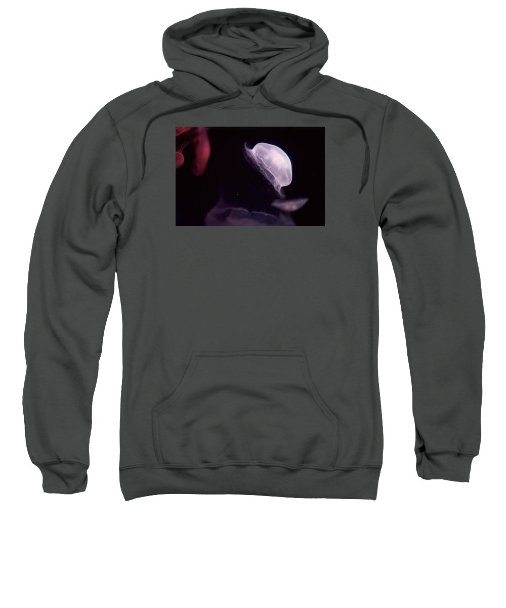 Jellyfish Sweatshirt featuring the photograph Jellyfish by Jared Giarrusso