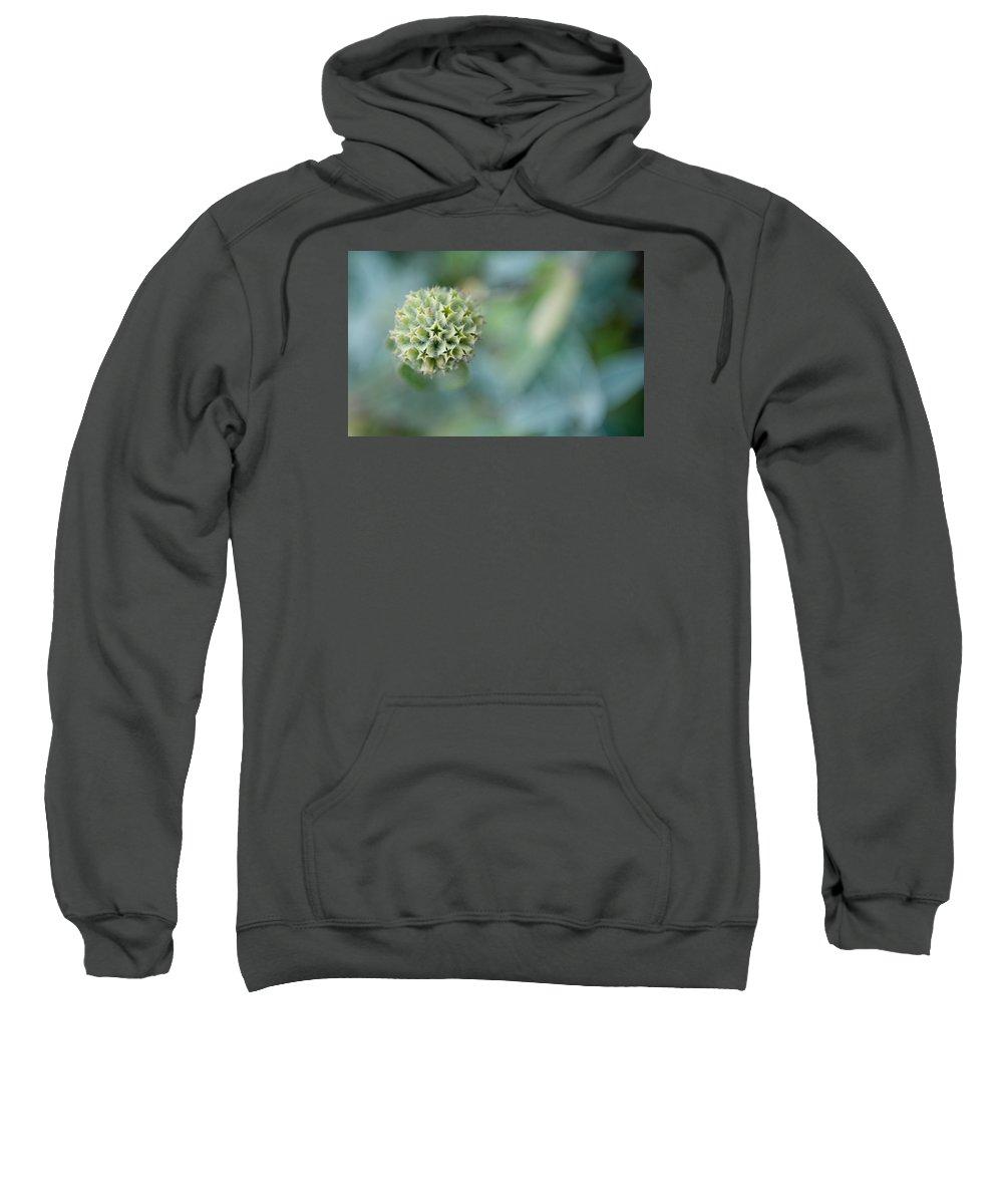 Jerusalem Sage Seed Head Sweatshirt featuring the photograph Jerusalem Sage Seed Head by Helen Northcott