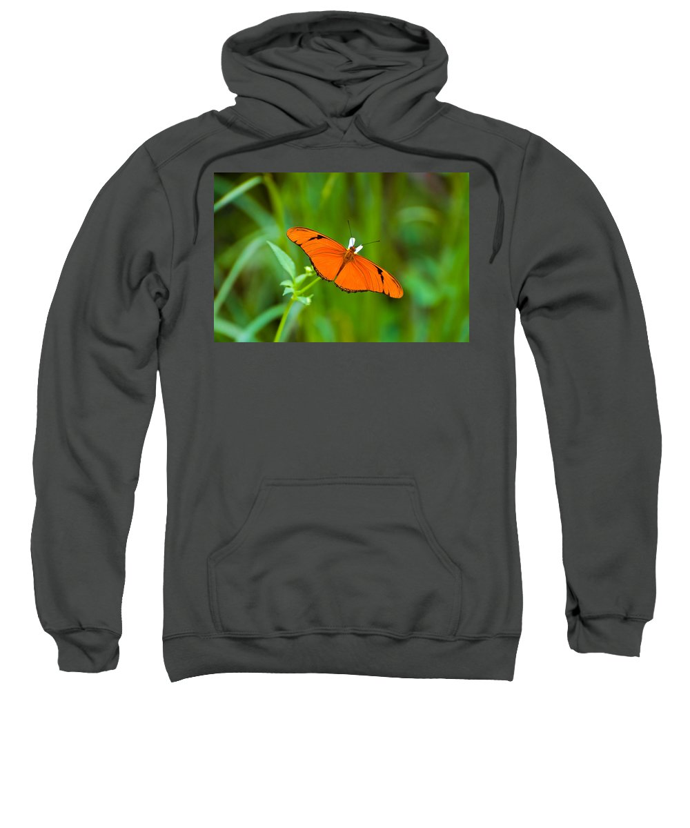 Butterfly Sweatshirt featuring the photograph Julia Butterfly by Rich Leighton
