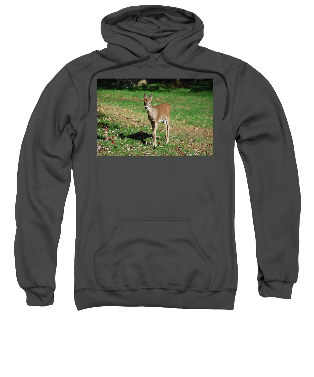 Deer Sweatshirt featuring the photograph Just A Baby by Lori Tambakis