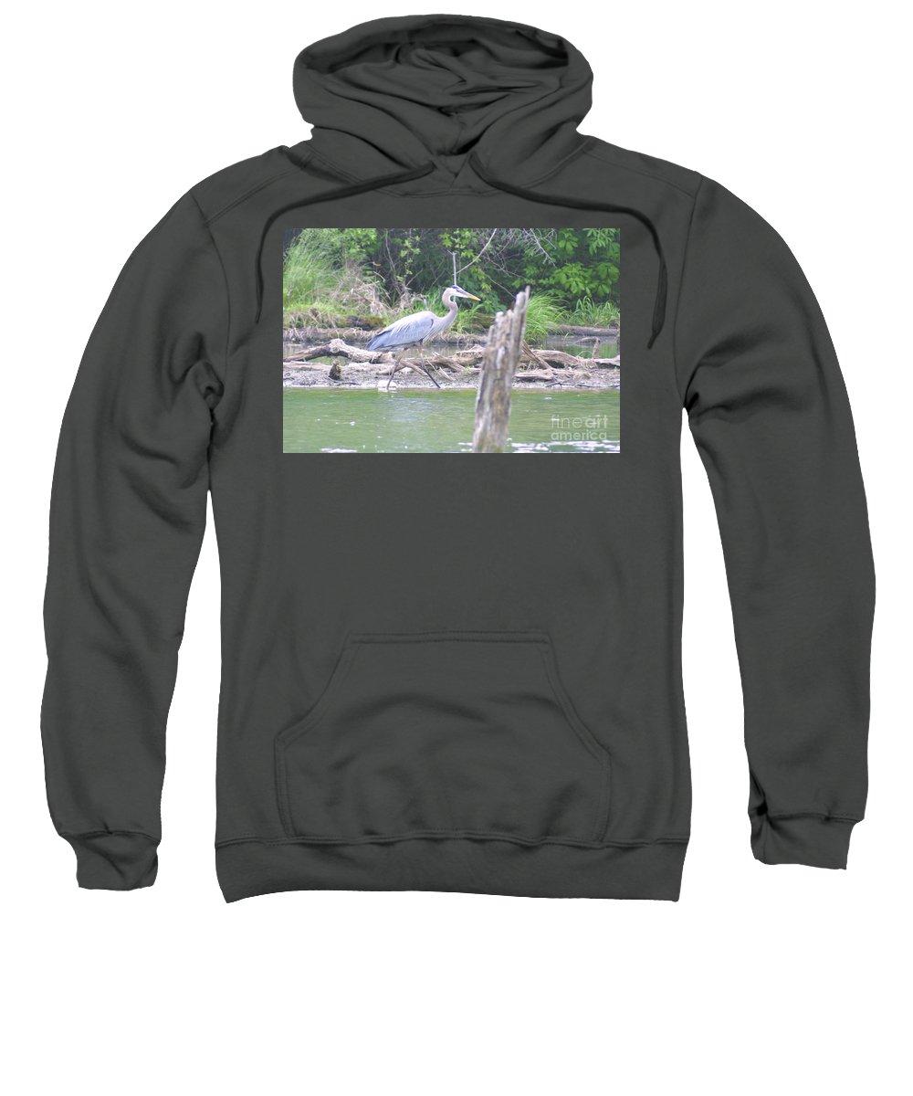 Highland Productions Llc Sweatshirt featuring the photograph Just An Evening Stroll II by Darren Dwayne Frazier