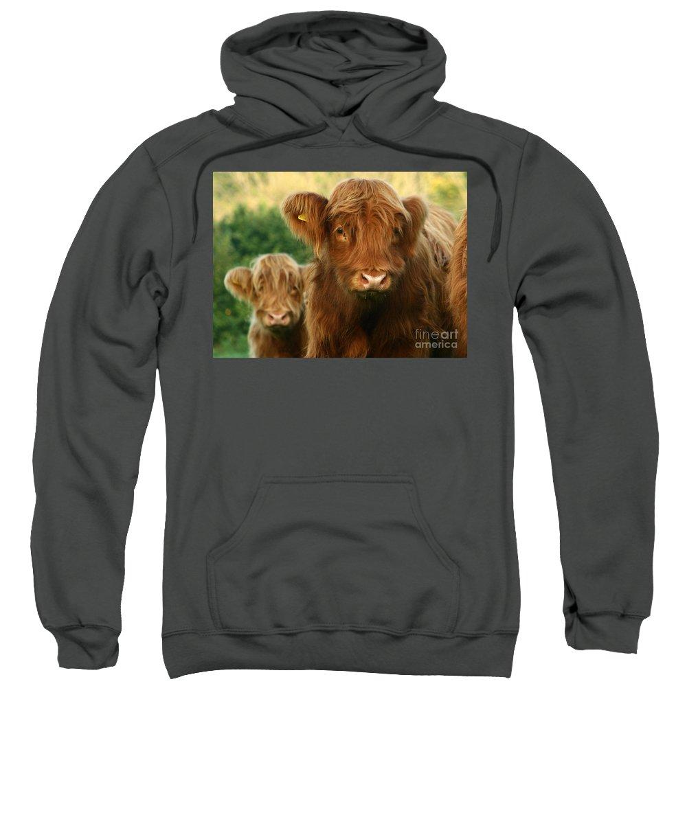 Cow Sweatshirt featuring the photograph Just Like Teddy Bears by Angel Ciesniarska