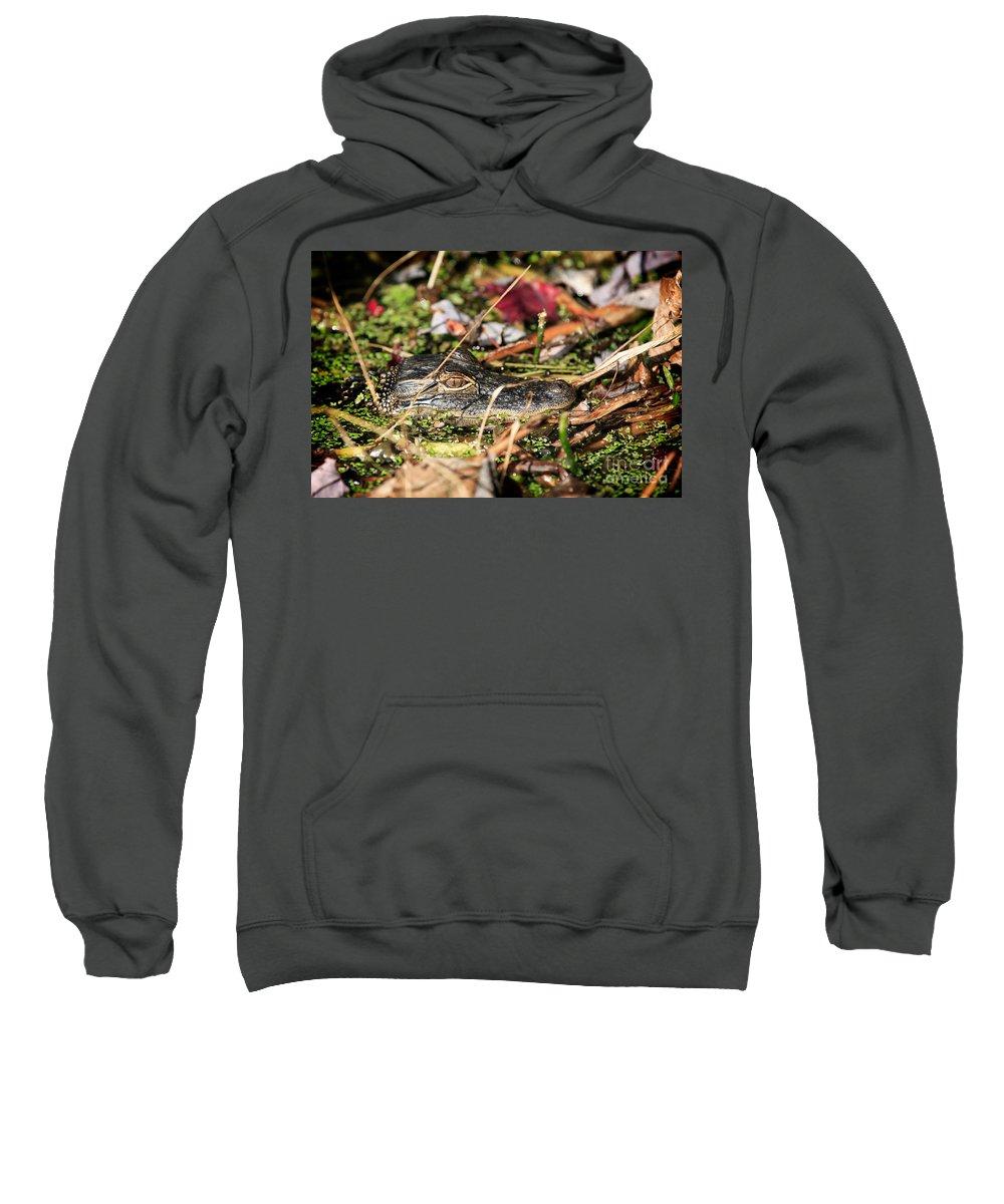Juvenile Sweatshirt featuring the photograph Juvenile American Alligator by Matt Suess