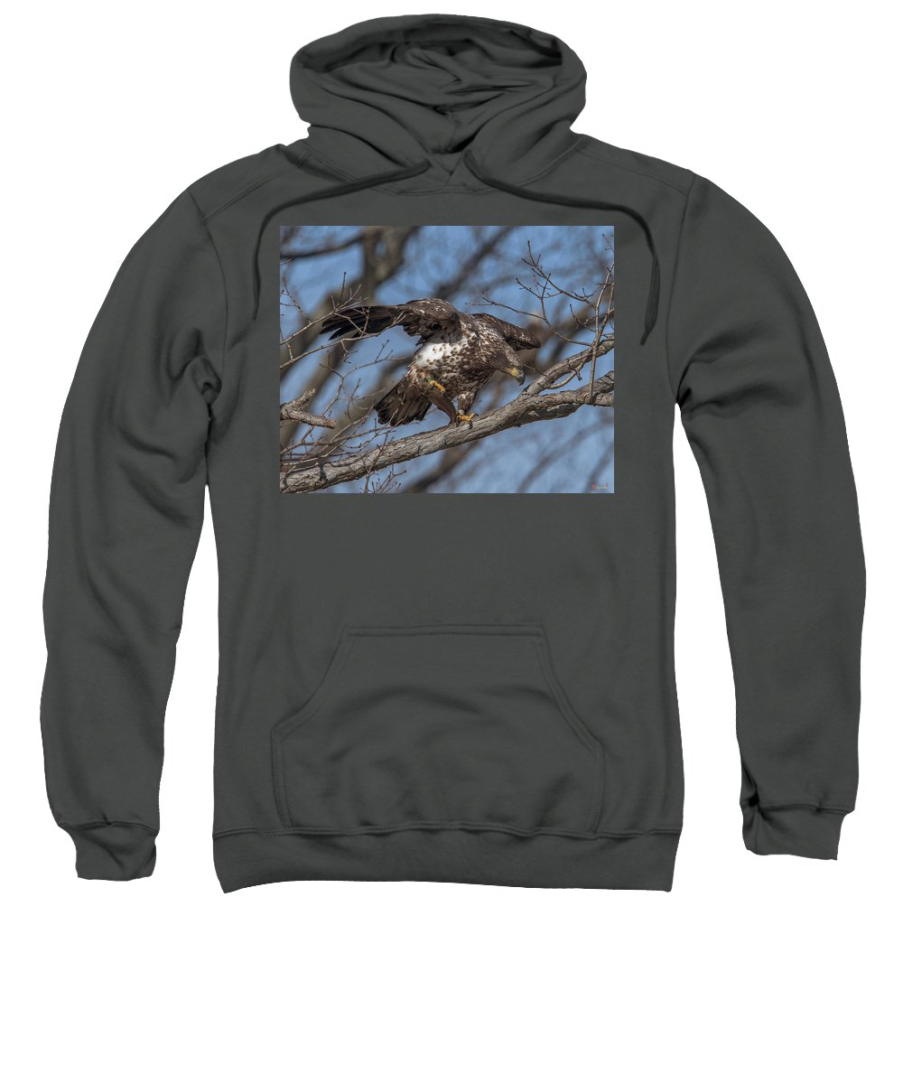 Nature Sweatshirt featuring the photograph Juvenile Bald Eagle With A Fish Drb0218 by Gerry Gantt