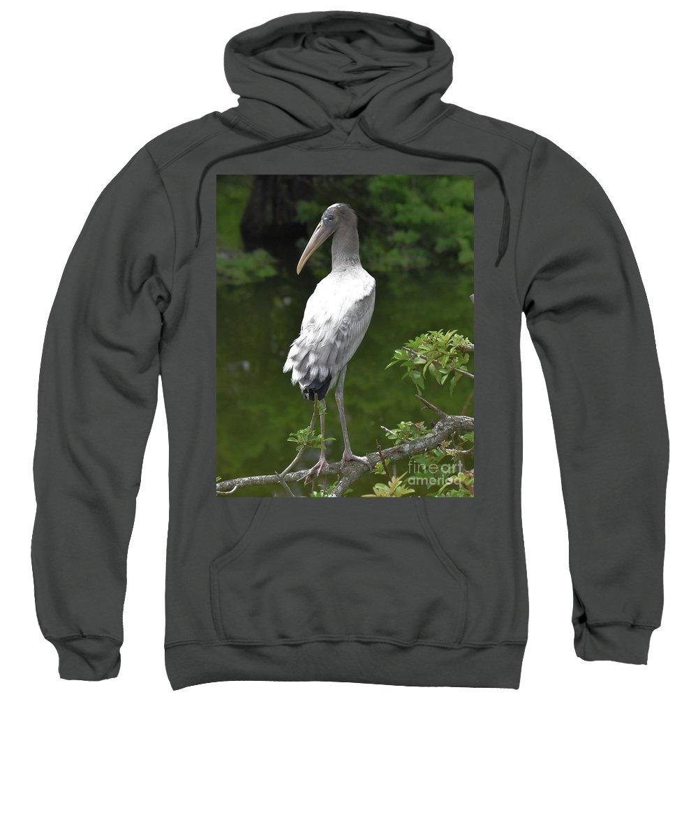 Animal Sweatshirt featuring the photograph Juvenile Wood Stork by Jim Lapp