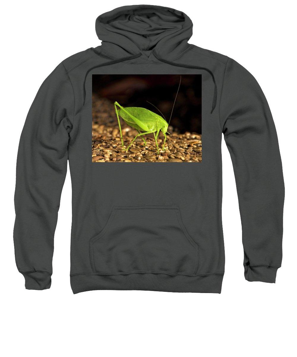 Bug Sweatshirt featuring the photograph Katydid Close Up Bug by Leon Winkowski