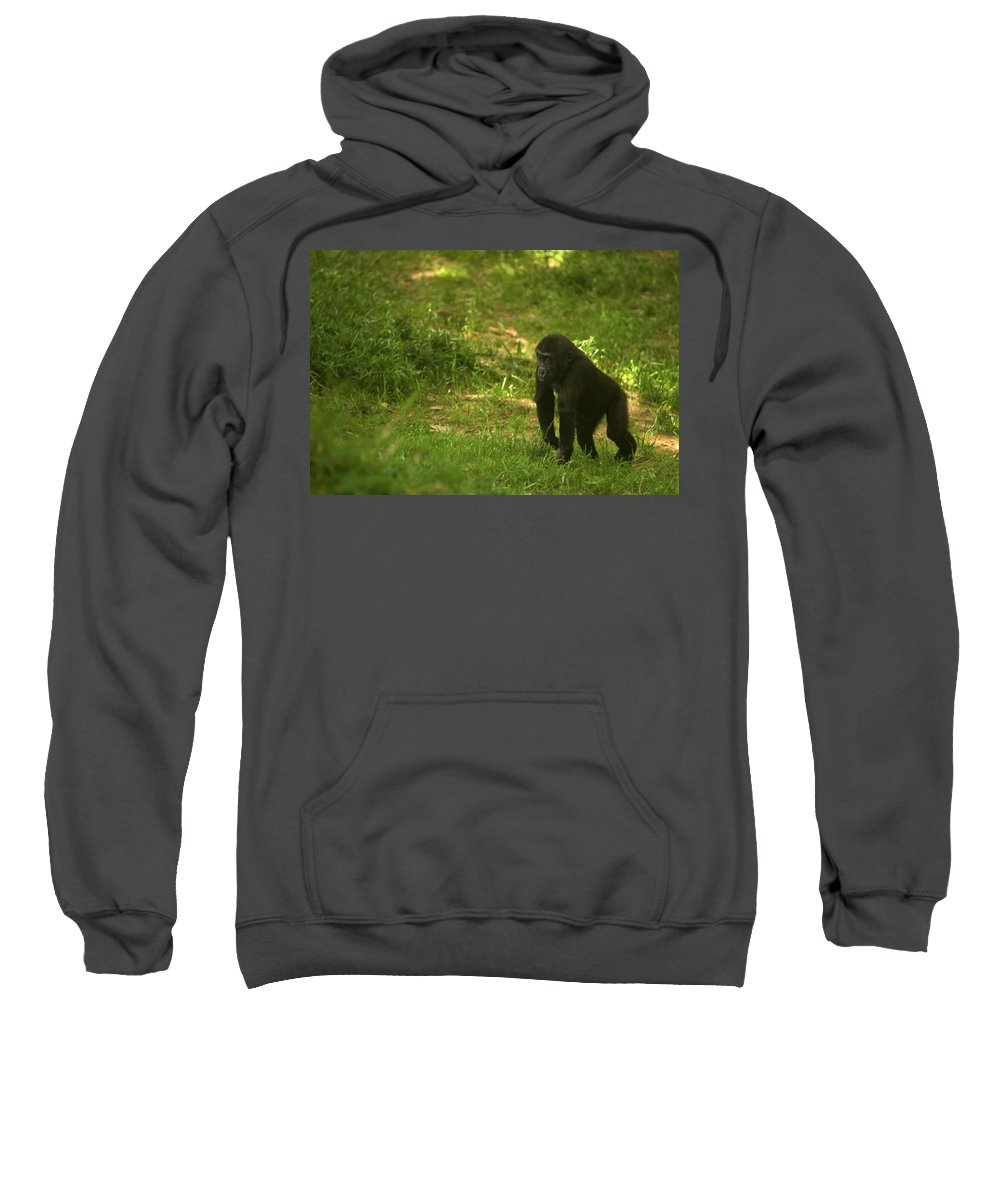 kibibi Sweatshirt featuring the photograph Kibibi by Paul Mangold