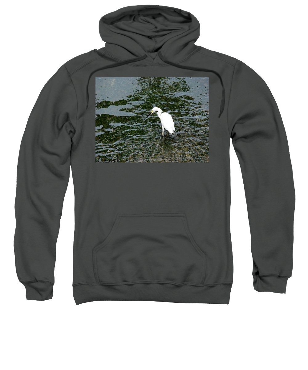 Kingston Sweatshirt featuring the photograph Kingston Jamaica Egret by Brett Winn