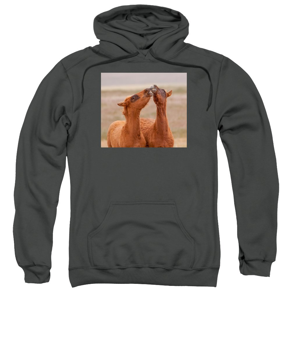 Wild Horse Sweatshirt featuring the photograph Kissing Bandits by Kent Keller