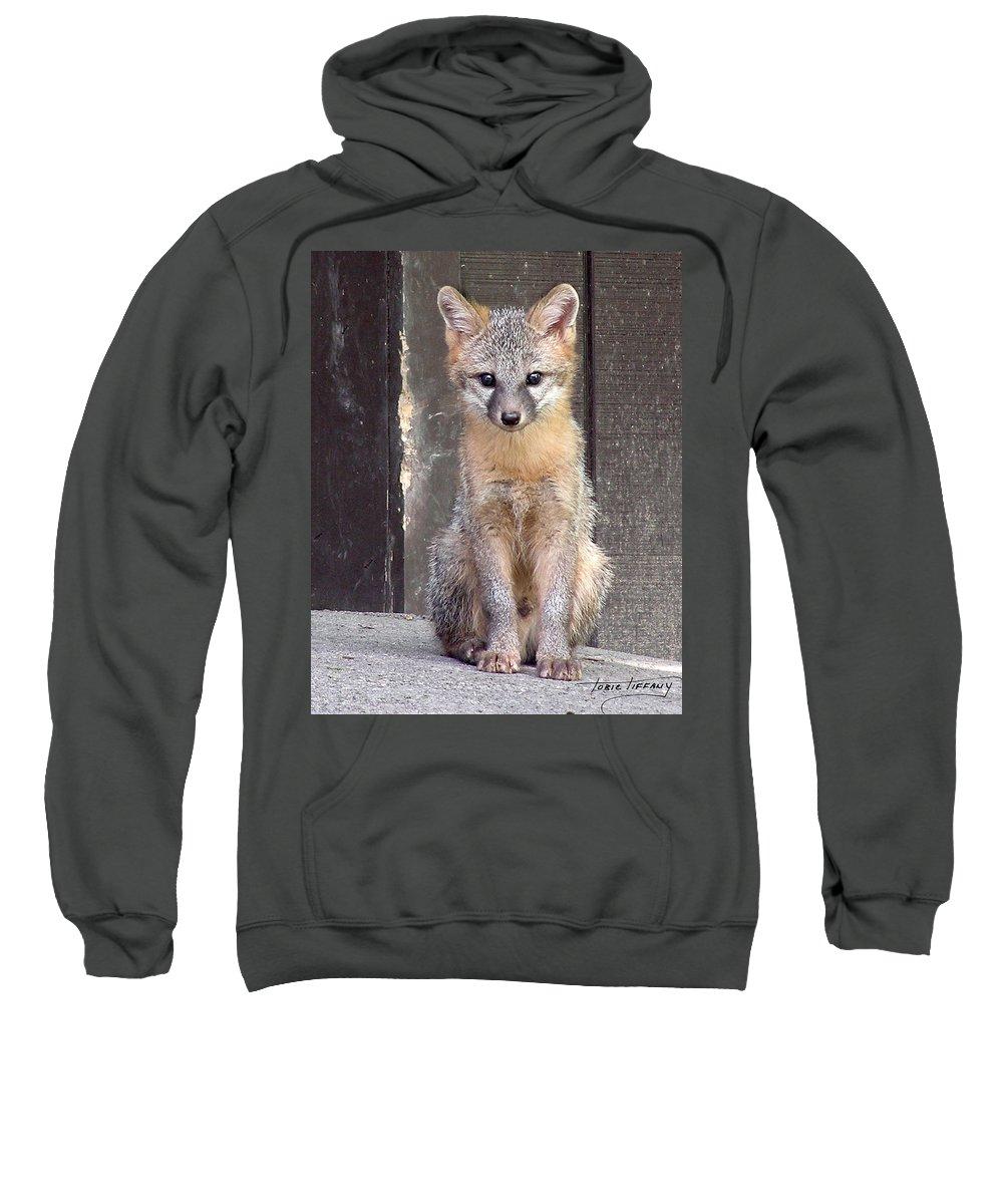 Kit Fox Sweatshirt featuring the photograph Kit Fox15 by Torie Tiffany