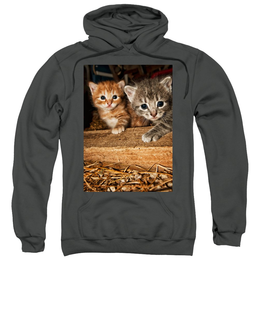 Kittens Sweatshirt featuring the photograph Kittens by Amber Flowers