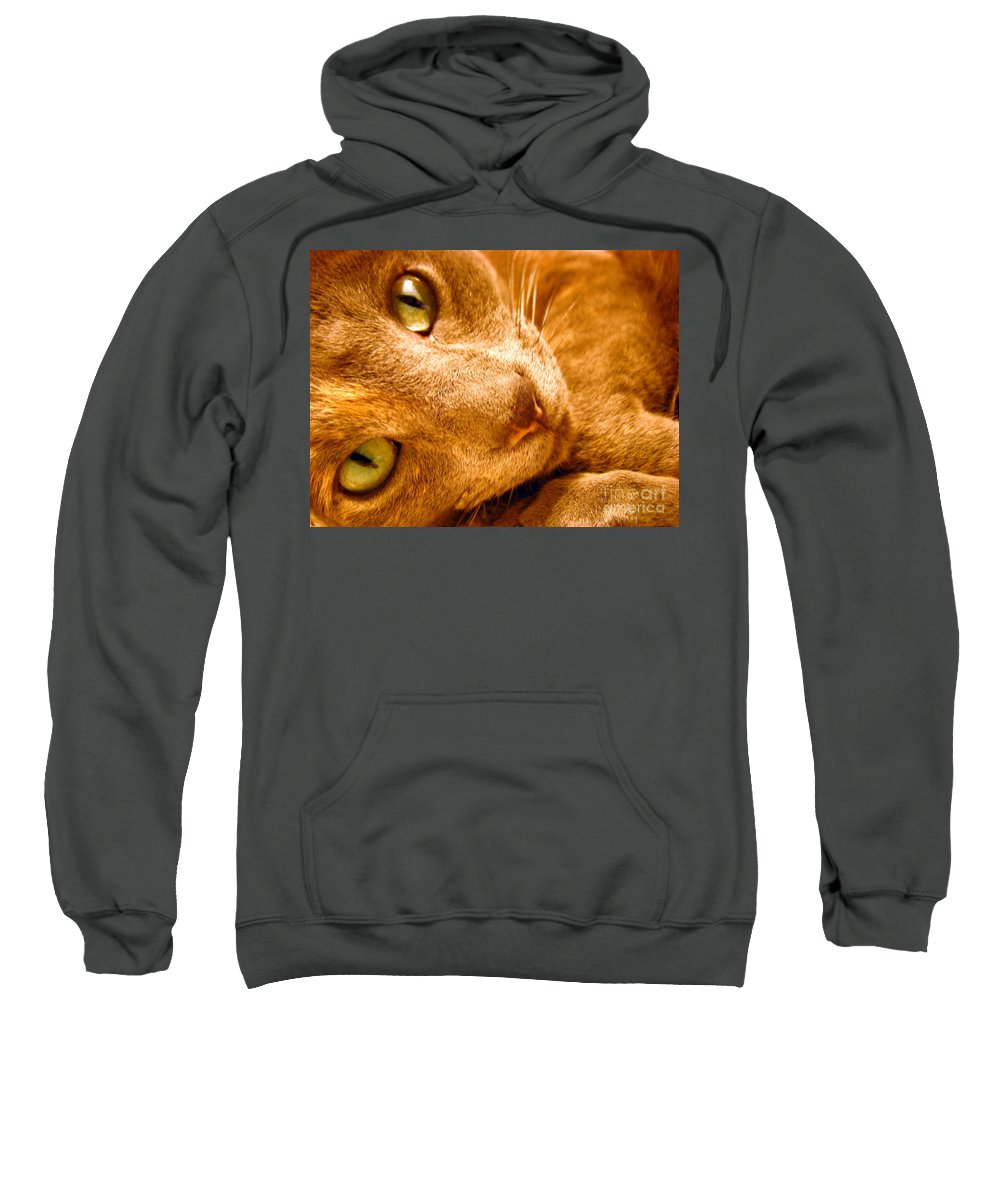 Cats Sweatshirt featuring the photograph Kitty by Amanda Barcon